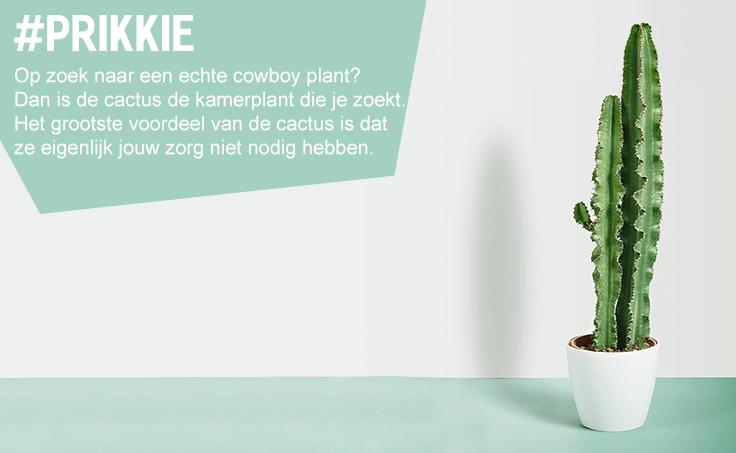 Bekijk planten