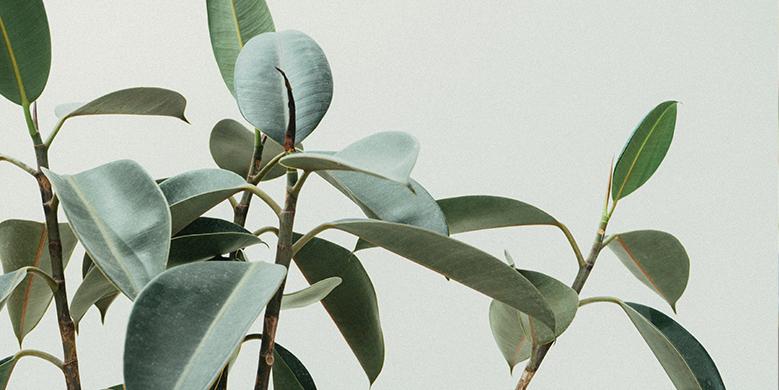 5 eenvoudige planten voor uw (thuis) kantoor