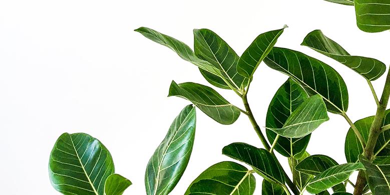 Hoe breng je een stervende plant weer tot leven?