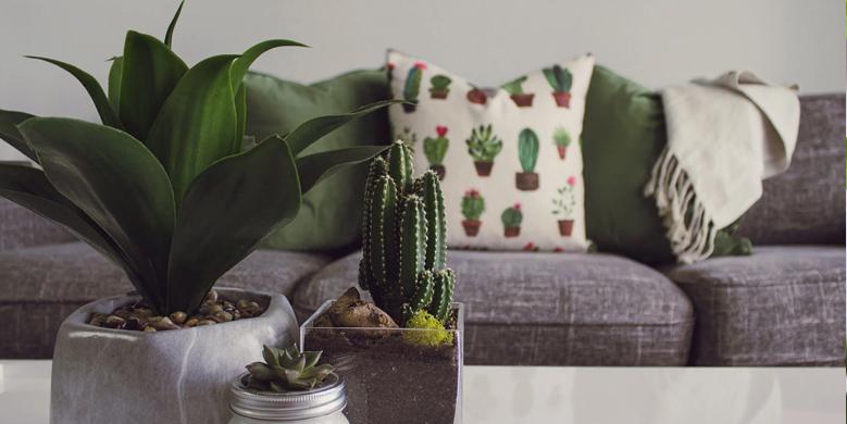 Hoe kies je een plant die bij je past?