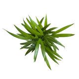 3x Goudpalm - Arecaceae - Hoogte: 35cm_