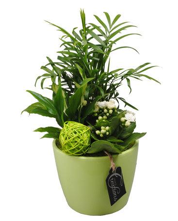 Arrangement Basic creatie in keramiek groen - Hoogte: 35 cm