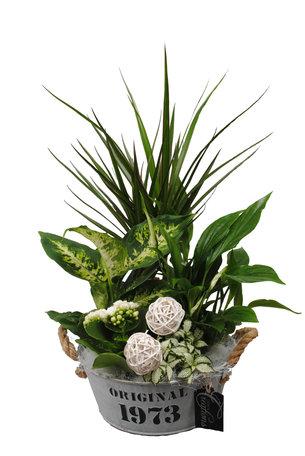 Arrangement Basic creatie in zink - Hoogte: 50 cm - Dieffenbachia, Dracaena, Spathiphyllum, Fittonia en een Kalanchoe